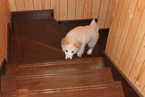 階段が登れるようになりました